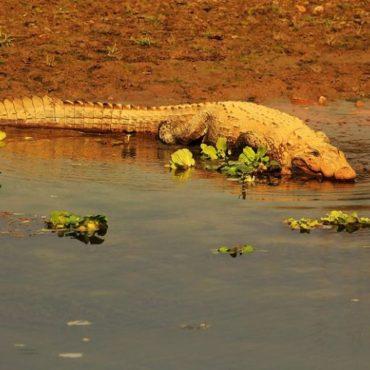 Chitwan – Vahşi Orman Yürüyüşü