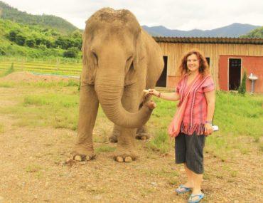 Fil Bakıcılığı – Tayland